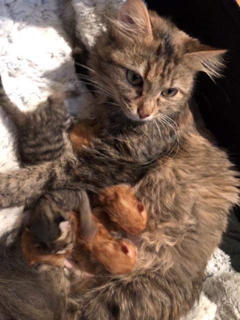 NIKIE et ses 3 chatons, femelle, ? Image611