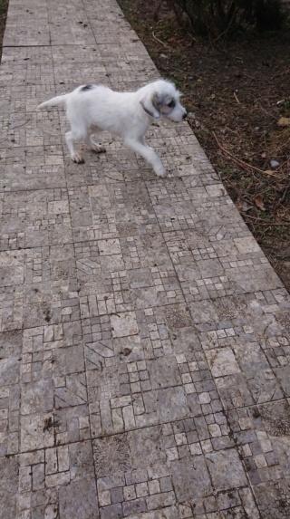 Shayne - mâle - refuge d'Arad - adopté via Arad 49297310