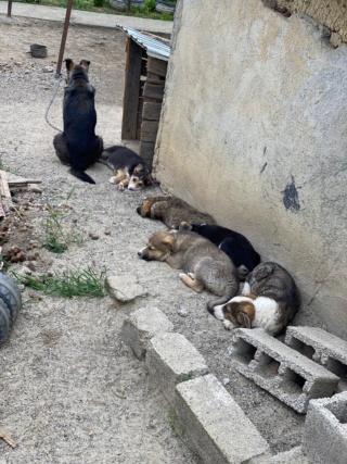 Clover- mâle- fourrière de Târgu Frumos - adopté via Andreea C_211