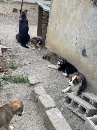 Clover- mâle- fourrière de Târgu Frumos - adopté via Andreea C_711