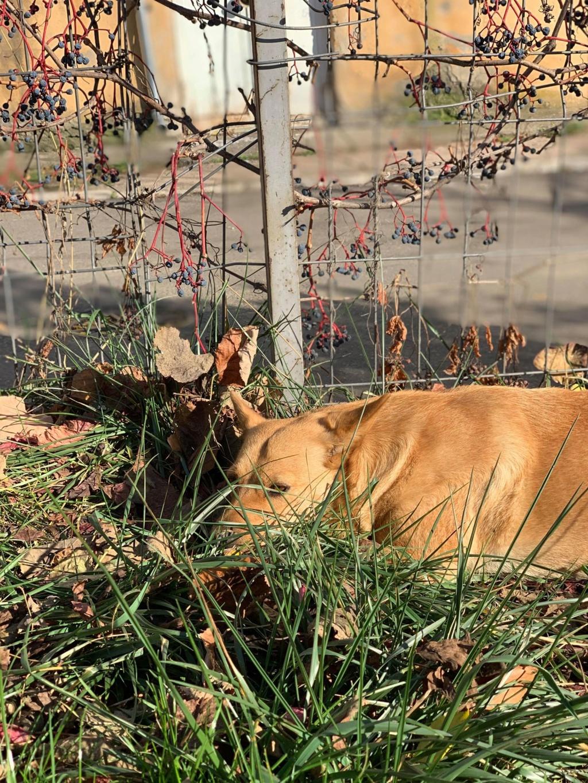 Flora- femelle- dans la rue à Târgu Frumos - réservée adoption (67) - octobre Flora_14
