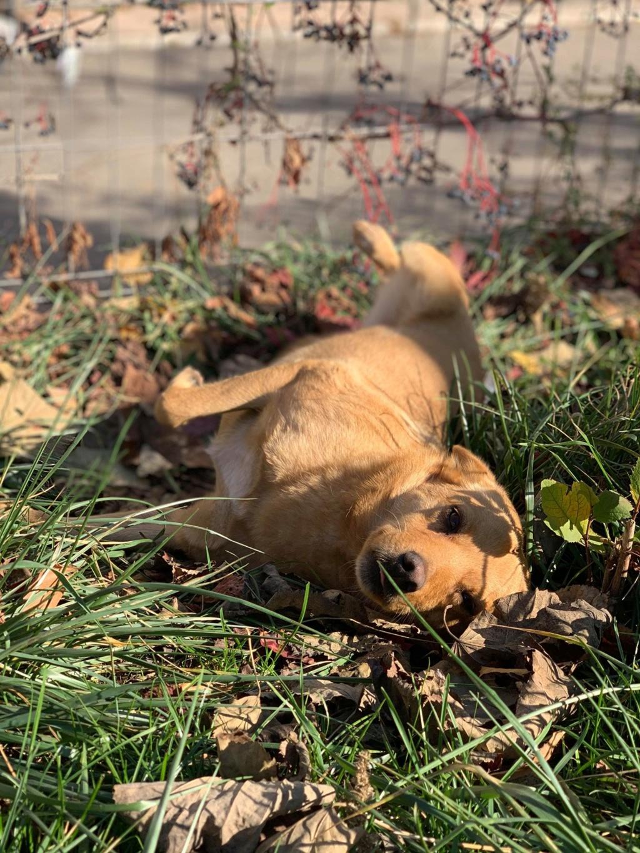 Flora- femelle- dans la rue à Târgu Frumos - réservée adoption (67) - octobre Flora_17