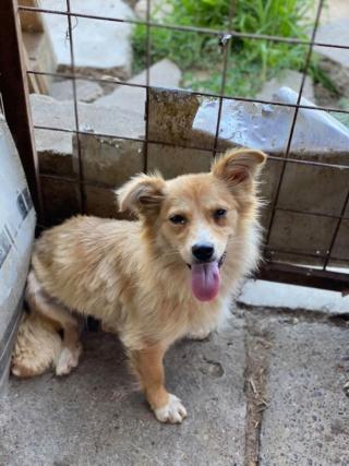 Cally (ex-Kawaii) - femelle- fourrière de Târgu Frumos - Réservée adoption (91) K_110