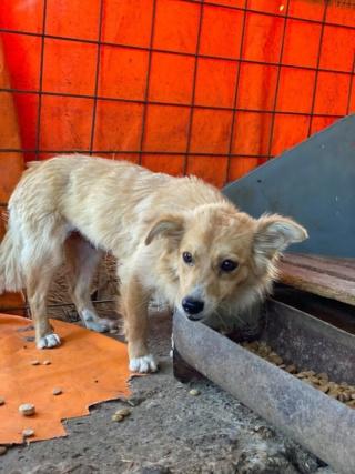 Cally (ex-Kawaii) - femelle- fourrière de Târgu Frumos - Réservée adoption (91) K_210