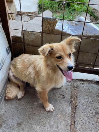 Cally (ex-Kawaii) - femelle- fourrière de Târgu Frumos - Réservée adoption (91) K_310