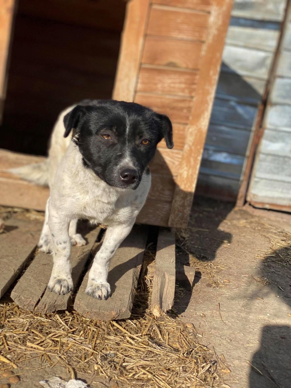 Olympe- femelle- fourrière de Târgu Frumos - adoptée via Andreea Olympe10