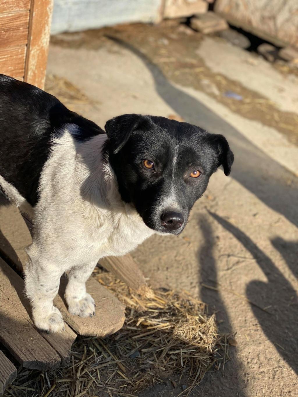 Olympe- femelle- fourrière de Târgu Frumos - adoptée via Andreea Olympe14