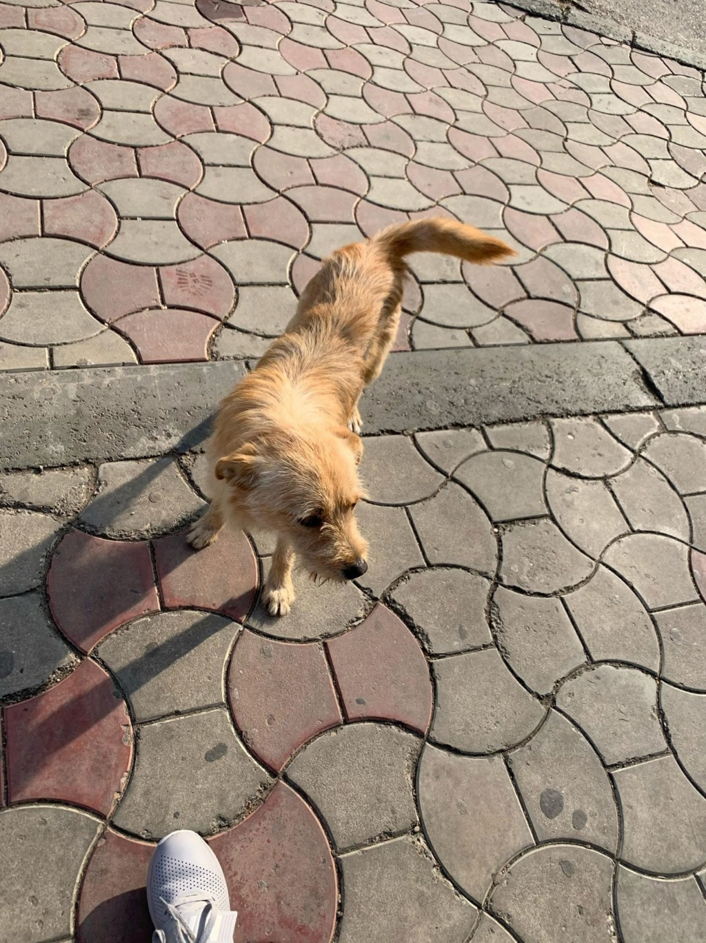 Pepito- mâle- dans les rues à Târgu Frumos Pepito10