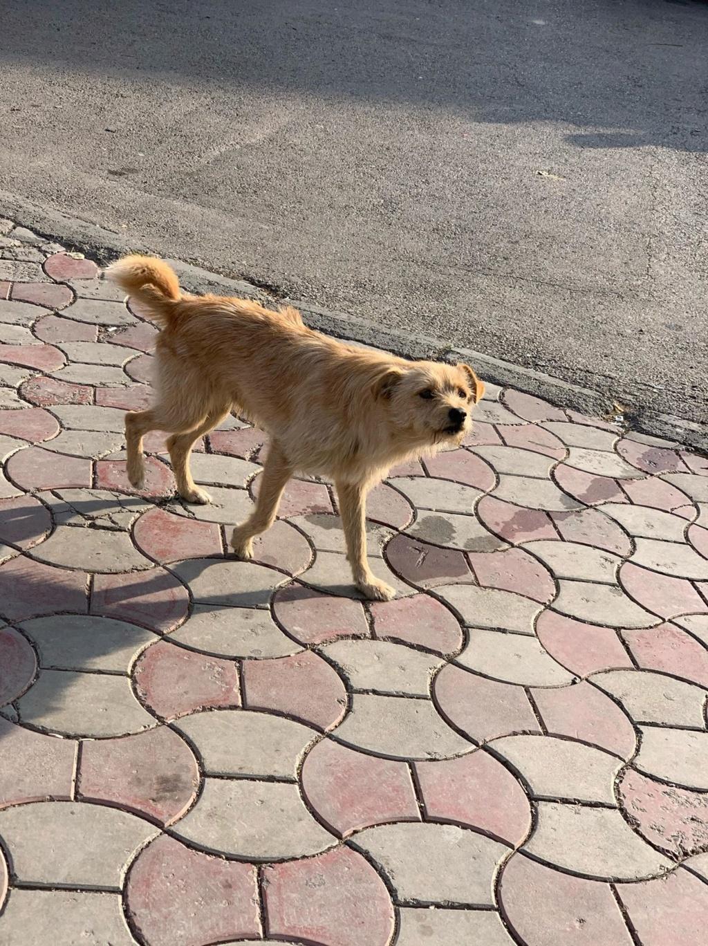 Pepito- mâle- dans les rues à Târgu Frumos Pepito12