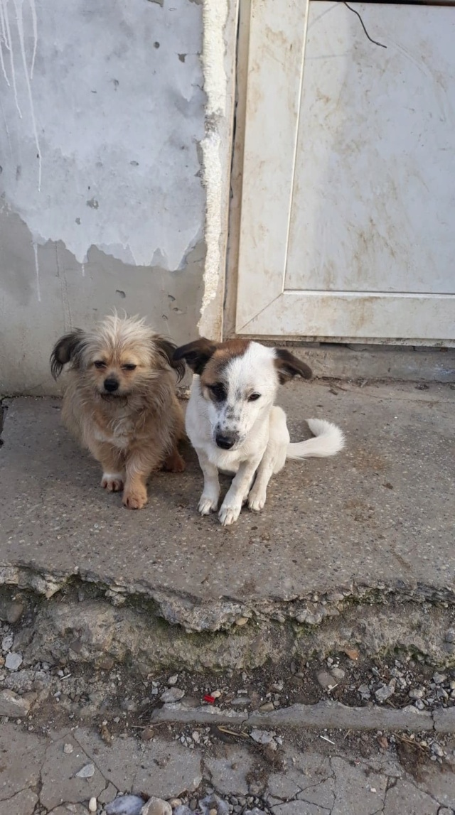 Pimkie- femelle- fourrière de Targû Frumos - sera en famille d'accueil dans le 67 en mai Pimkie10
