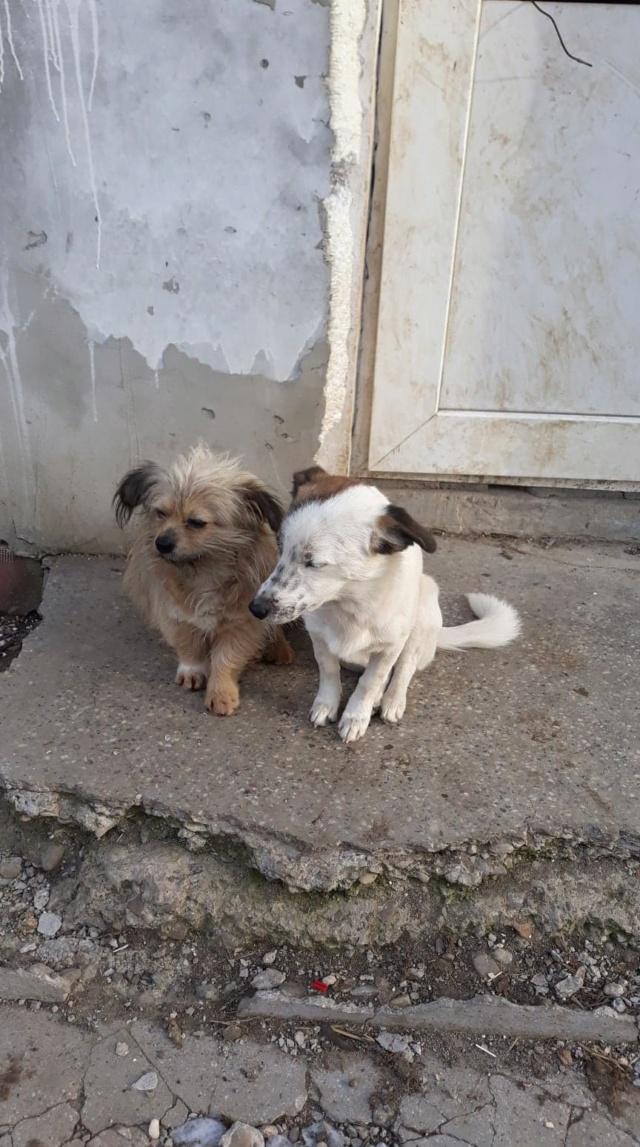 Pimkie- femelle- fourrière de Targû Frumos - sera en famille d'accueil dans le 67 en mai Pimkie11