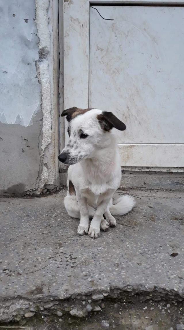 Pimkie- femelle- fourrière de Targû Frumos - sera en famille d'accueil dans le 67 en mai Pimkie13