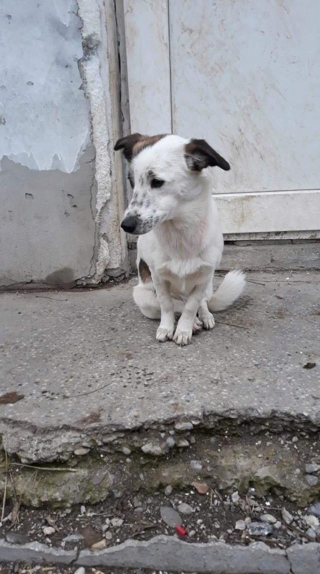Pimkie- femelle- fourrière de Targû Frumos - sera en famille d'accueil dans le 67 en mai Pimkie14