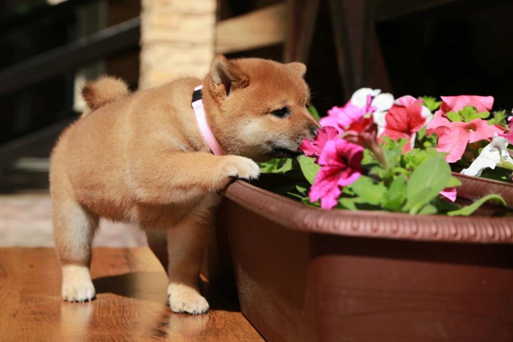 Куплю щенка девочку (Москва, МО и Санкт-Петербург) 36af1e10