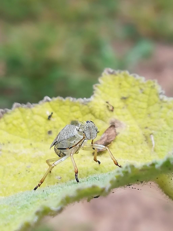 quel est cet etrange insecte Img_2012