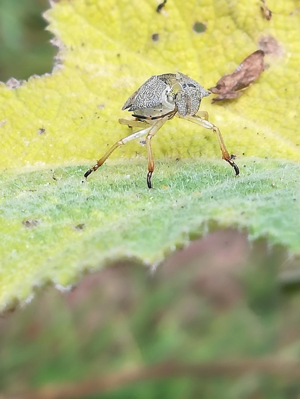 quel est cet etrange insecte Img_2013