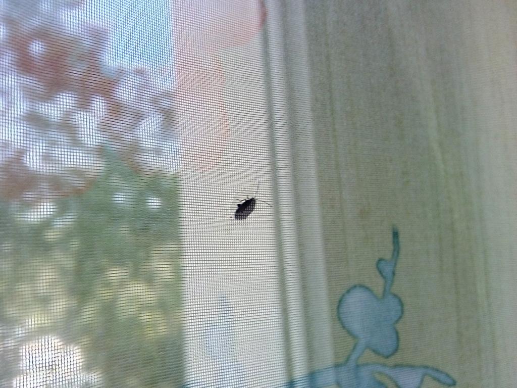 Reconnaître cette insectes Img_2010