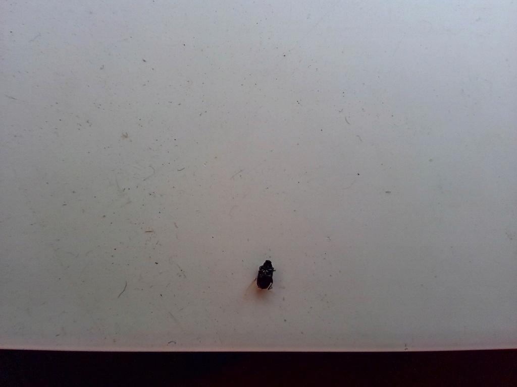 Reconnaître cette insectes Img_2014