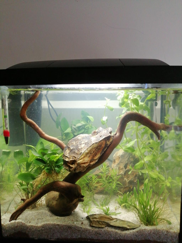 Présentation de mon aquarium 25 litres 15715610