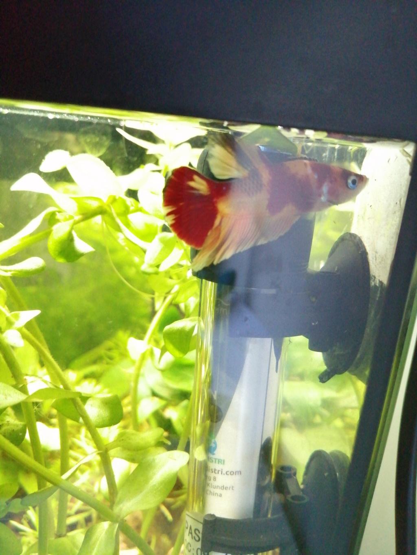 Présentation de mon aquarium 25 litres 15739810