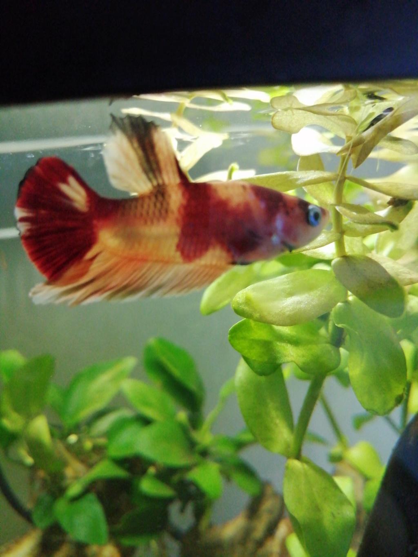 Présentation de mon aquarium 25 litres 15739812