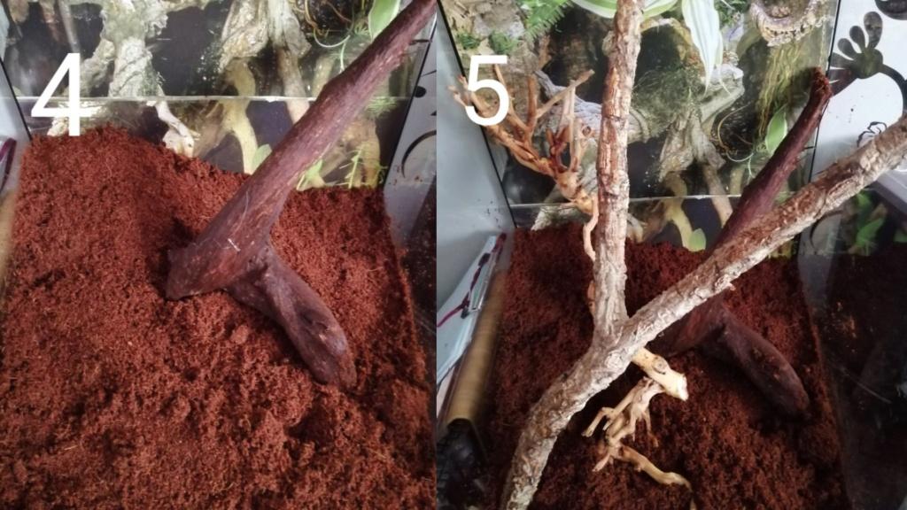 Projet terrarium et suivi d'un gecko  Captur11
