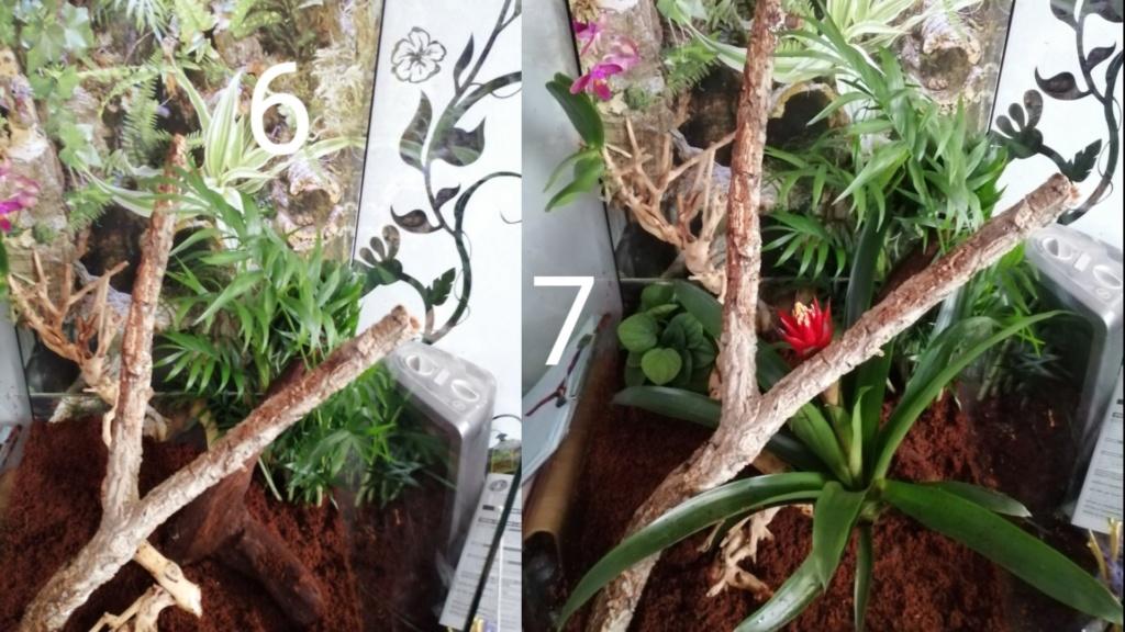 Projet terrarium et suivi d'un gecko  Captur12