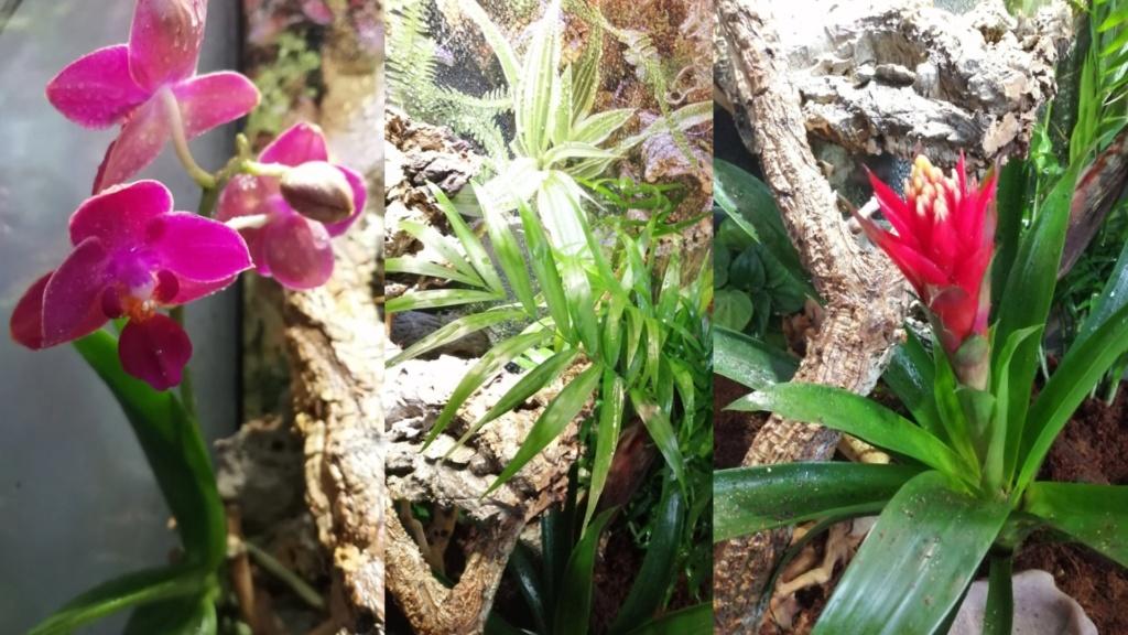 Projet terrarium et suivi d'un gecko  Captur14