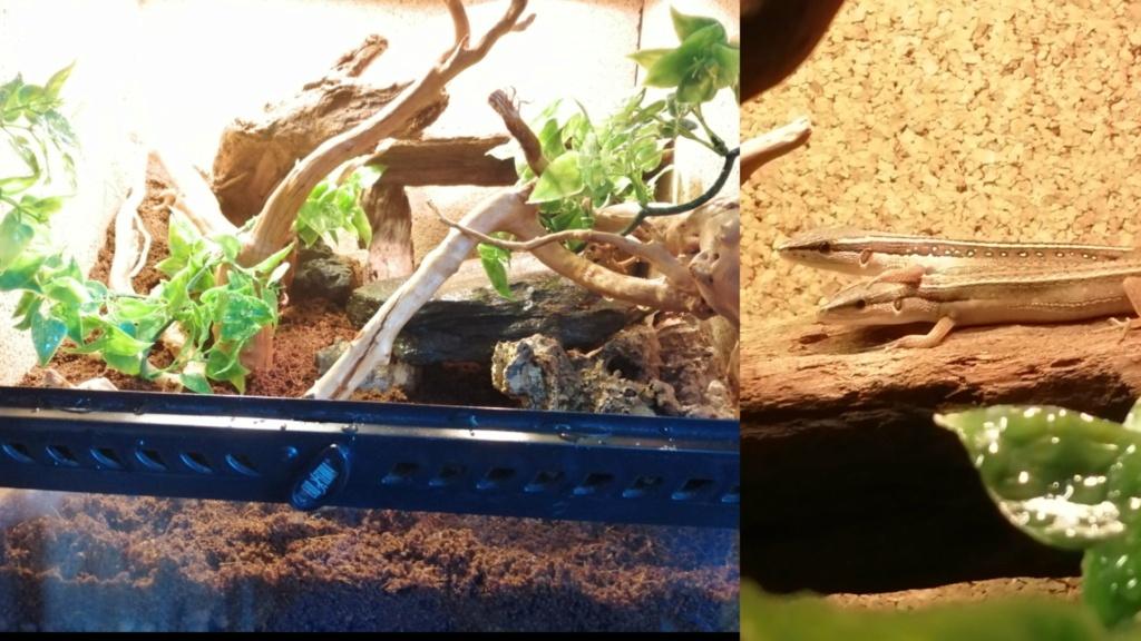 Des nouvelles de mes reptiles  Captur20