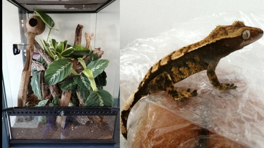 Des nouvelles de mes reptiles  Captur21