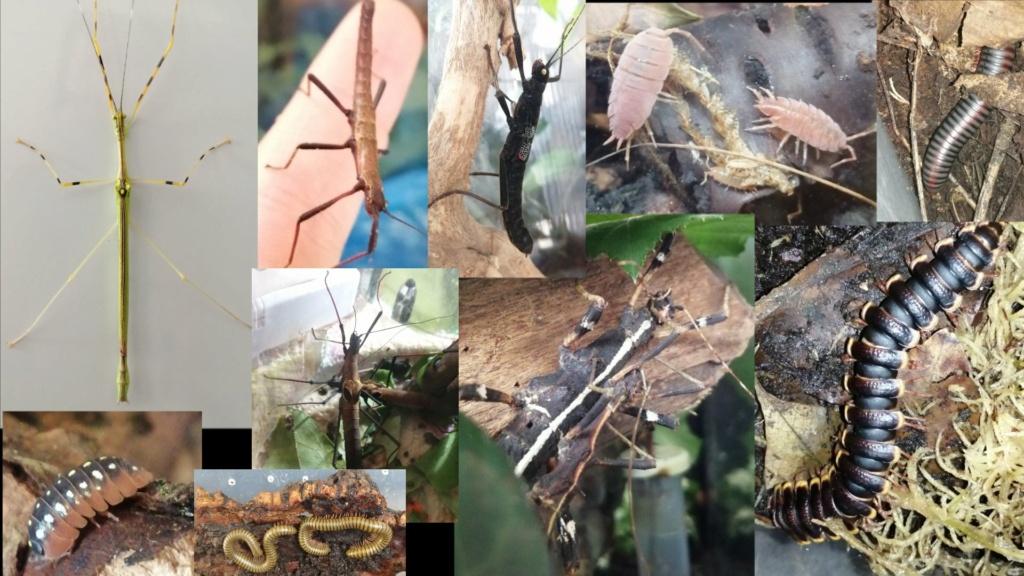 Des nouvelles de mes reptiles  Captur22