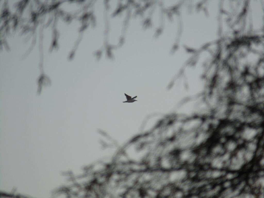 photographie d'oiseaux Img_1110