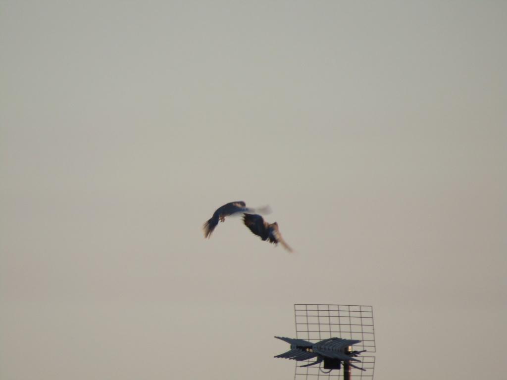 photographie d'oiseaux Img_1111