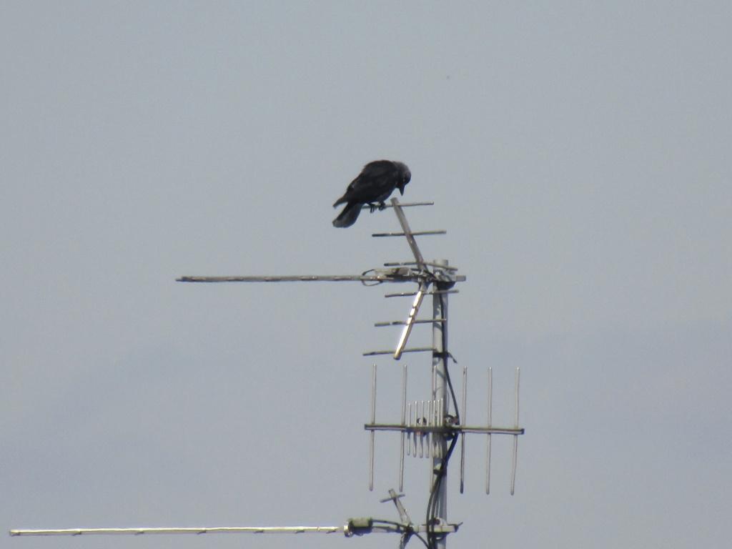 photographie d'oiseaux Img_1210