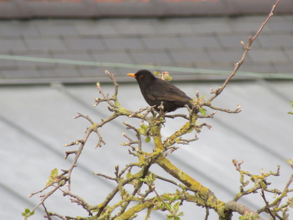 photographie d'oiseaux Img_1213