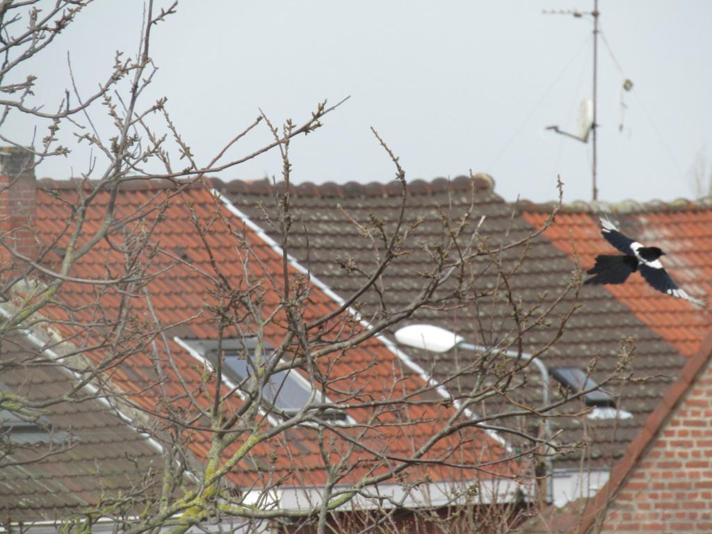 photographie d'oiseaux Img_1214