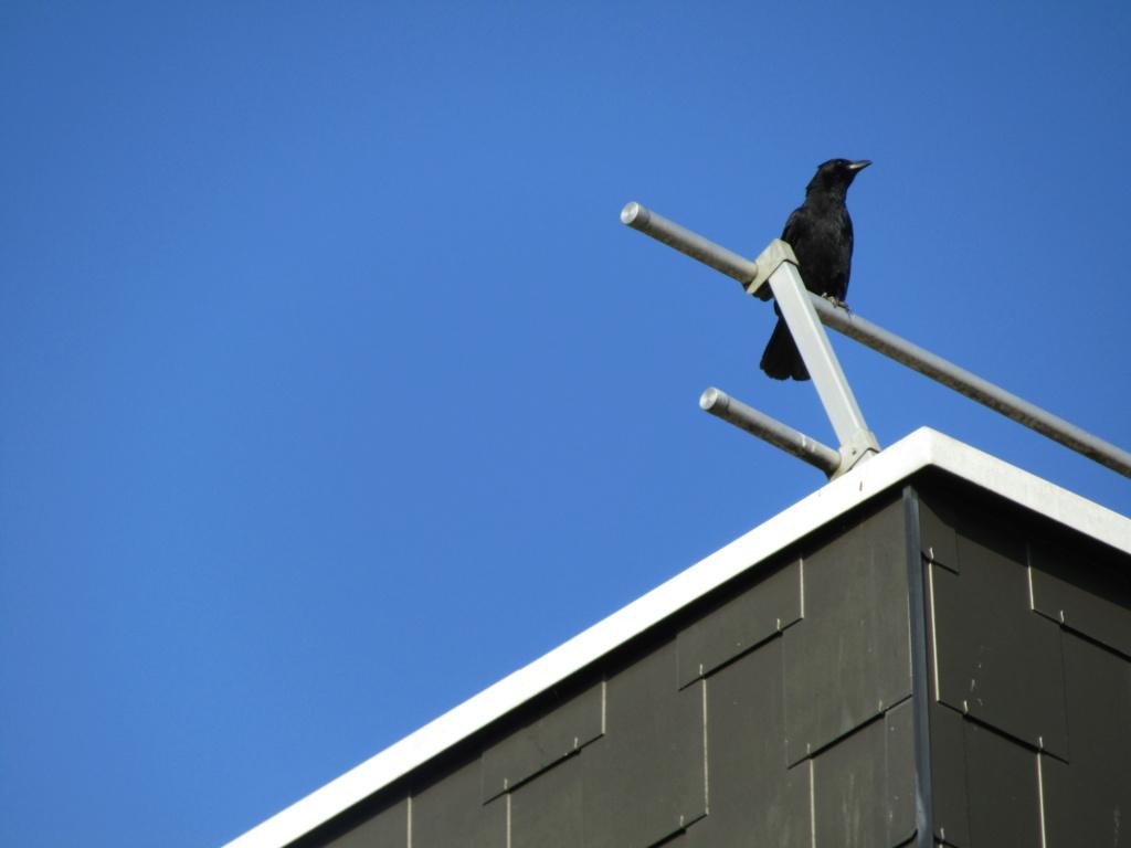 photographie d'oiseaux Img_1215