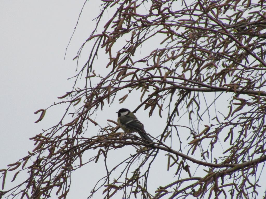 photographie d'oiseaux Img_1216