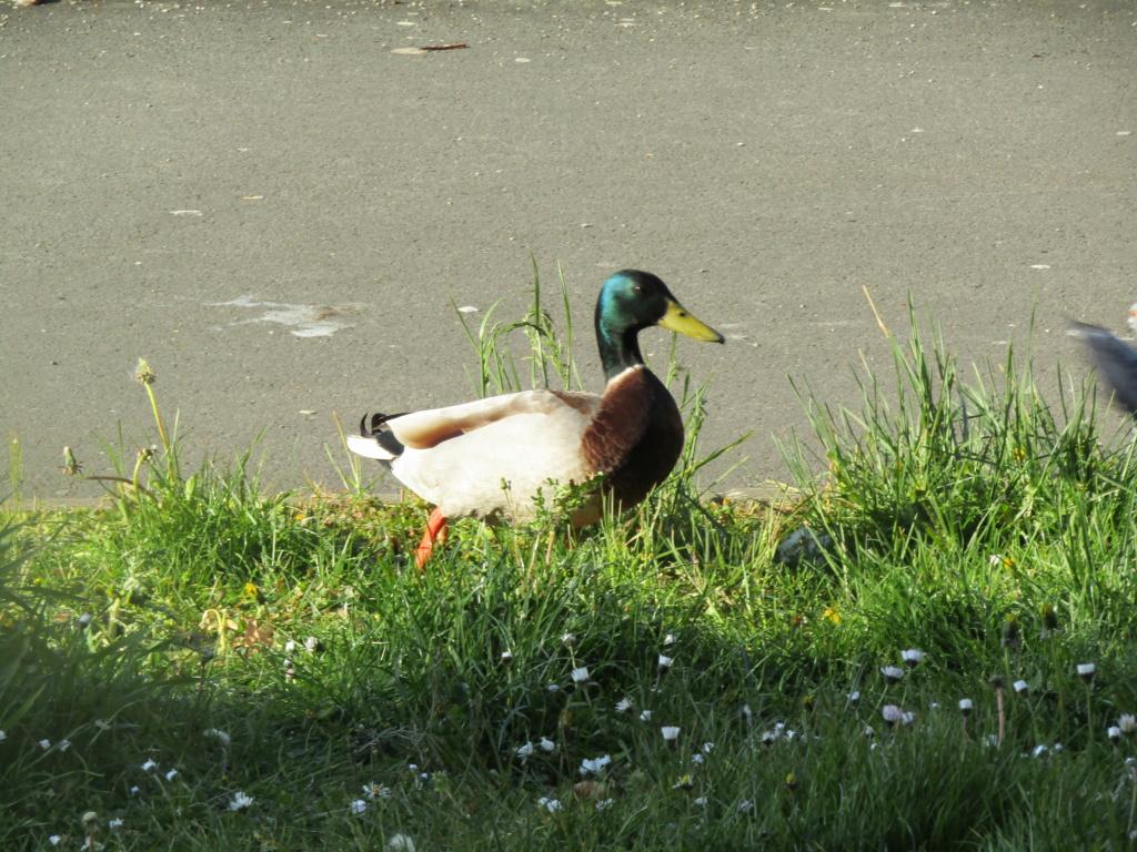 photographie d'oiseaux Img_1217