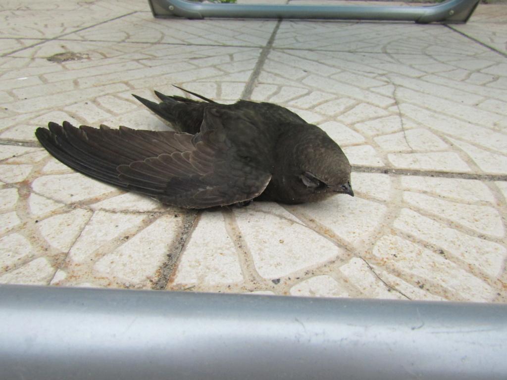 photographie d'oiseaux - Page 2 Img_1410