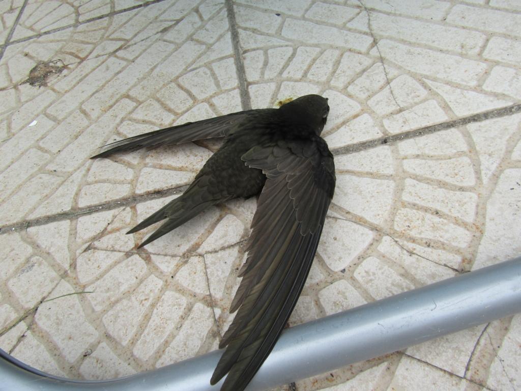 photographie d'oiseaux - Page 2 Img_1412