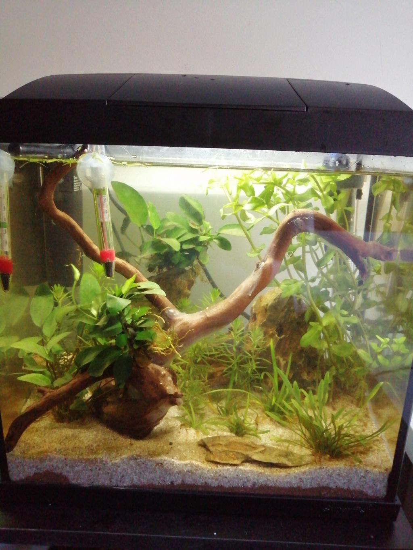 Présentation de mon aquarium 25 litres Img_2019