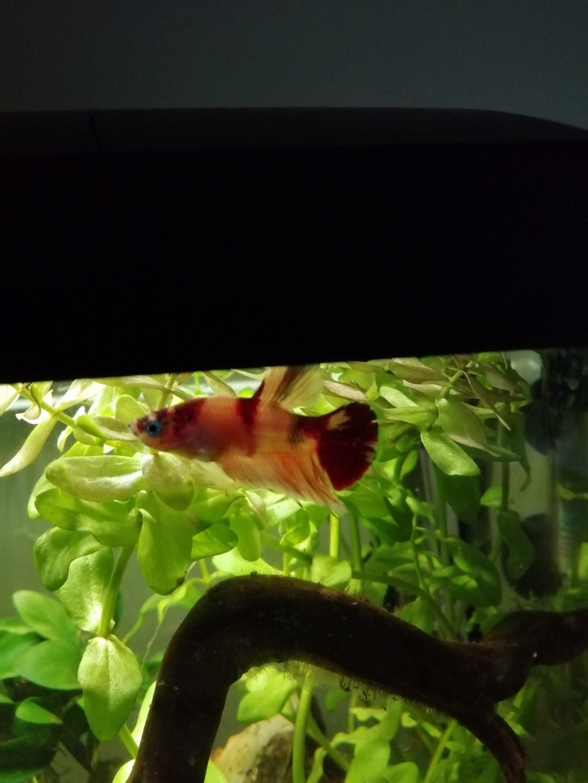 Présentation de mon aquarium 25 litres Img_2020