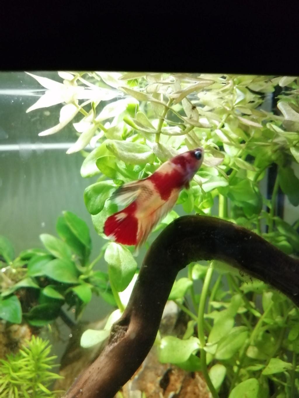 Présentation de mon aquarium 25 litres Img_2021