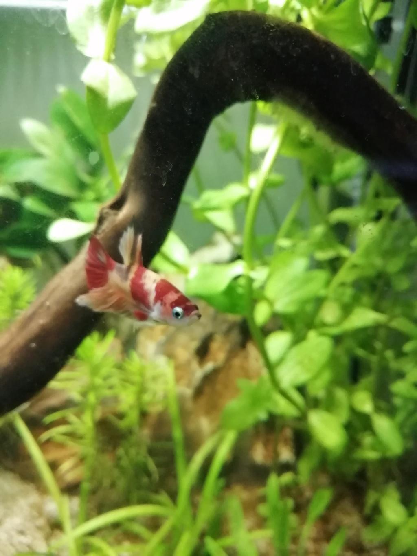 Présentation de mon aquarium 25 litres Img_2022