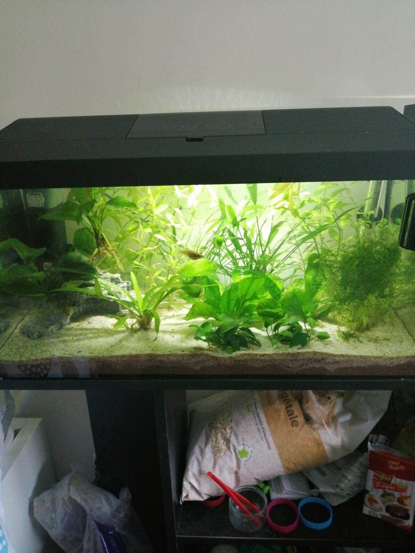 Présentation de mon aquarium 54 litres Img_2023