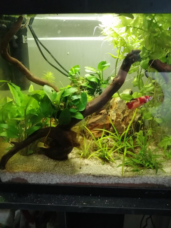 Présentation de mon aquarium 25 litres - Page 2 Img_2053