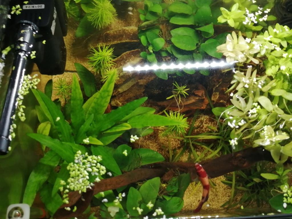 Présentation de mon aquarium 25 litres - Page 2 Img_2054