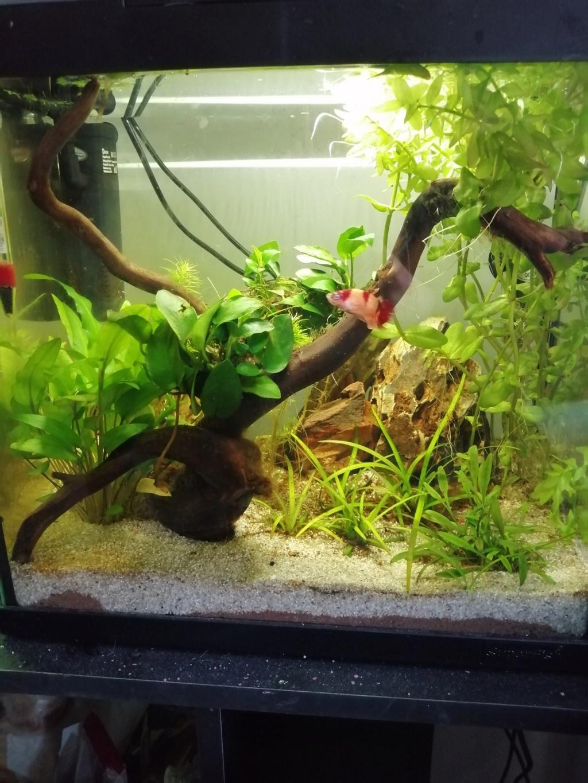 Présentation de mon aquarium 25 litres - Page 2 Img_2056