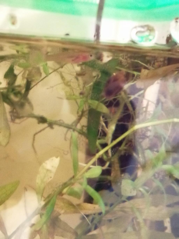 [Article] Mon expérience de ma reproduction de killi.  Img_2154
